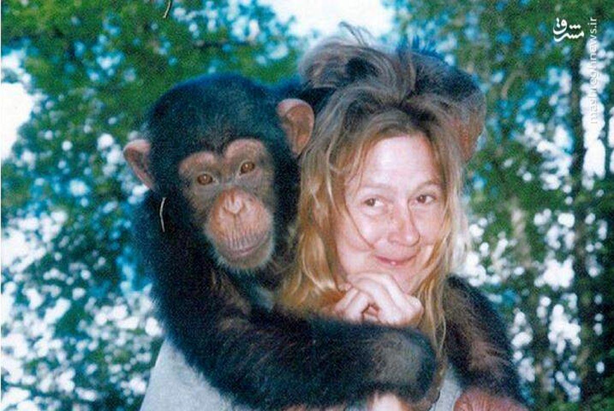 آبله میمون