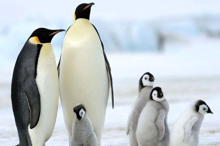تصاویر جذاب و منحصر به فرد از زندگی پنگوئن ها