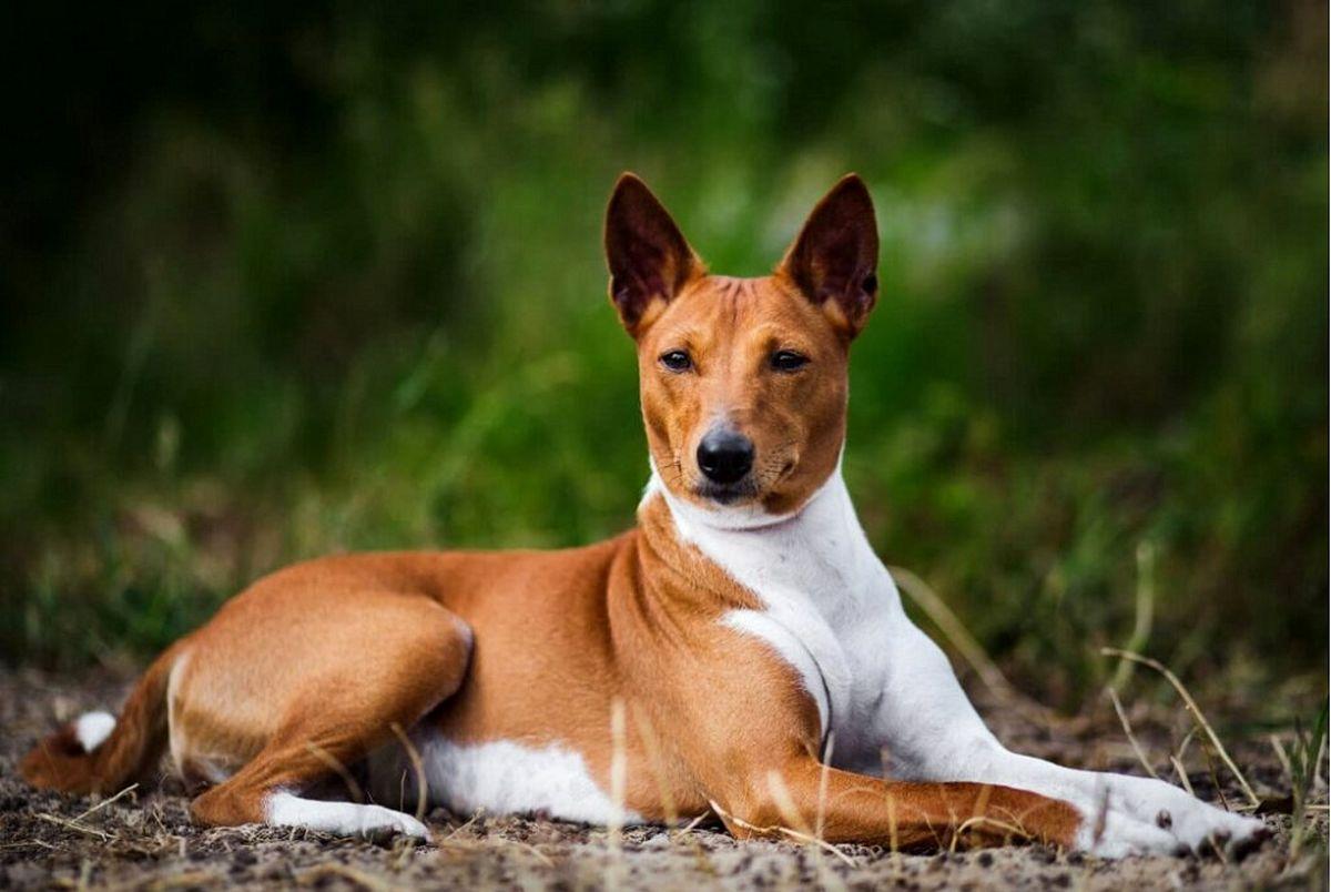 خطرناک ترین سگ های جهان