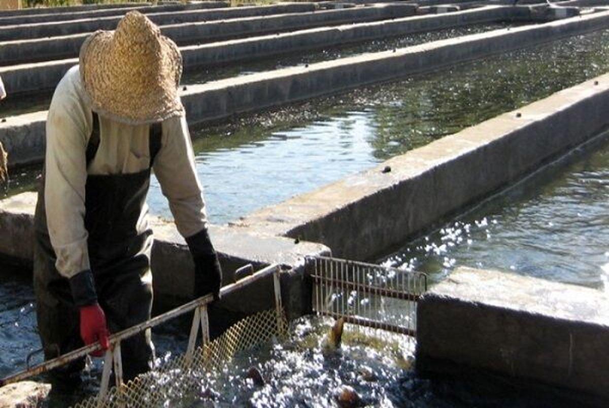 ۶۳۰ تن ماهیان سردآبی توسط عشایر لرستان تولید می شود