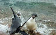 تصاویری جالب و خنده دار از دنیای حیوانات